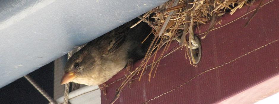 bird control Asbury Park