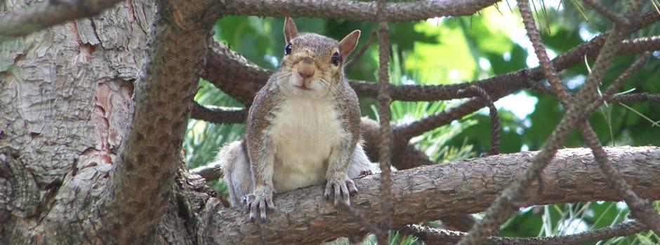 Asbury Park Wildlife Removal